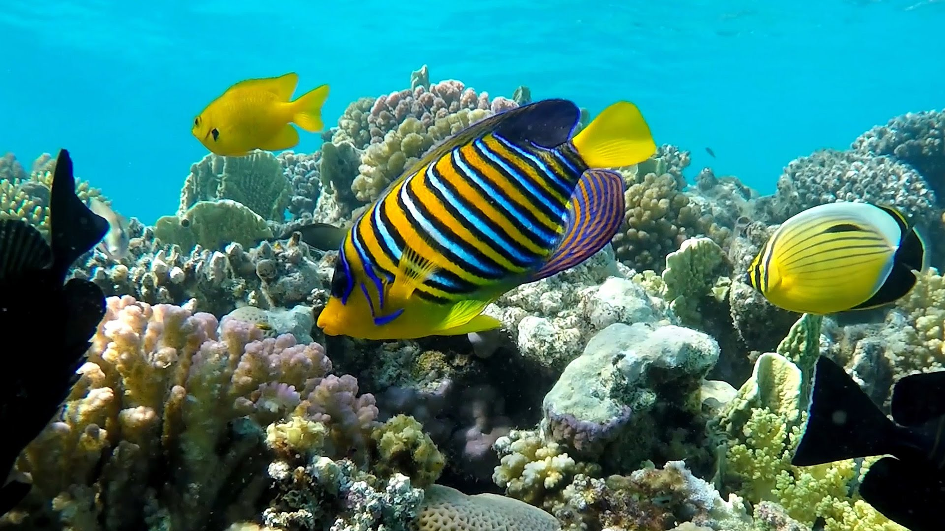 Подводный мир Макади, Красное море, Египет.